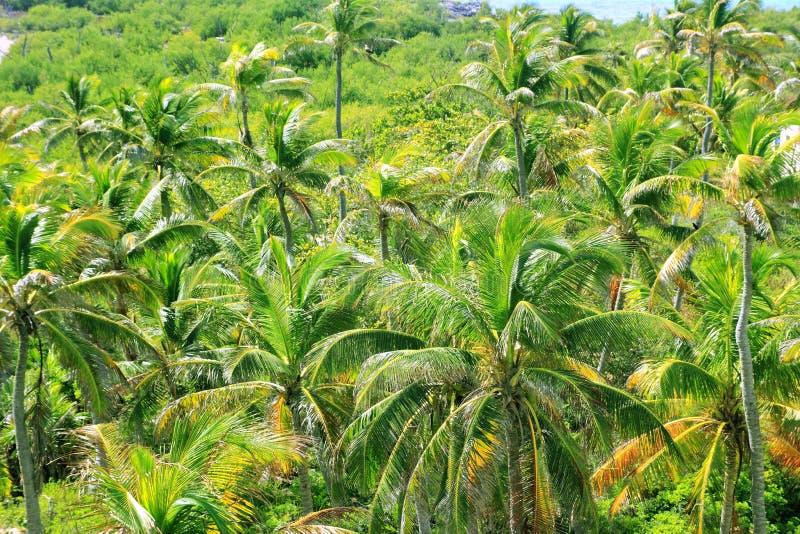 空中加勒比密林棕榈树视图 免版税图库摄影