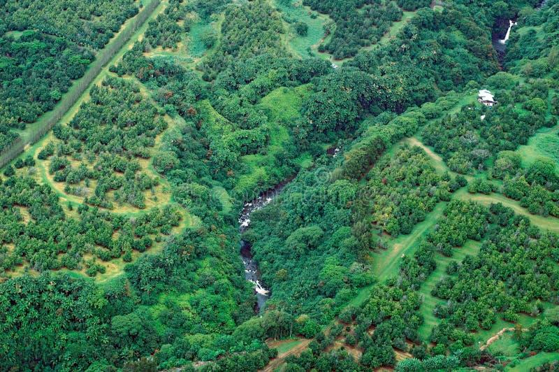 空中大森林海岛雨射击 免版税库存图片