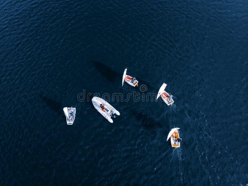 空中寄生虫竞争炫耀白色游艇和小船在海大海  库存照片