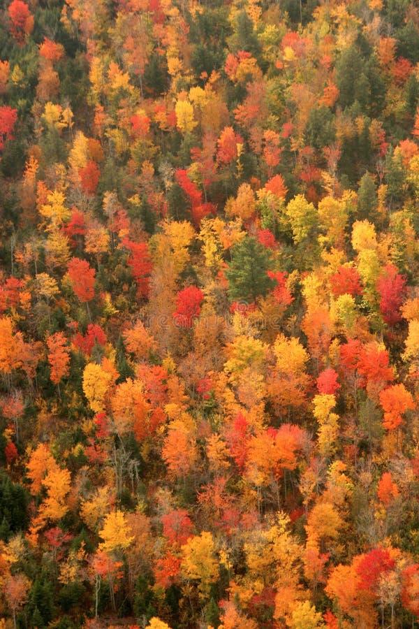 空中更改的颜色英国秋天新的视图 免版税库存照片