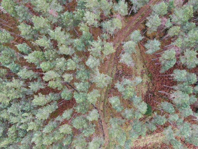 空中森林射击苏格兰高地 免版税库存图片