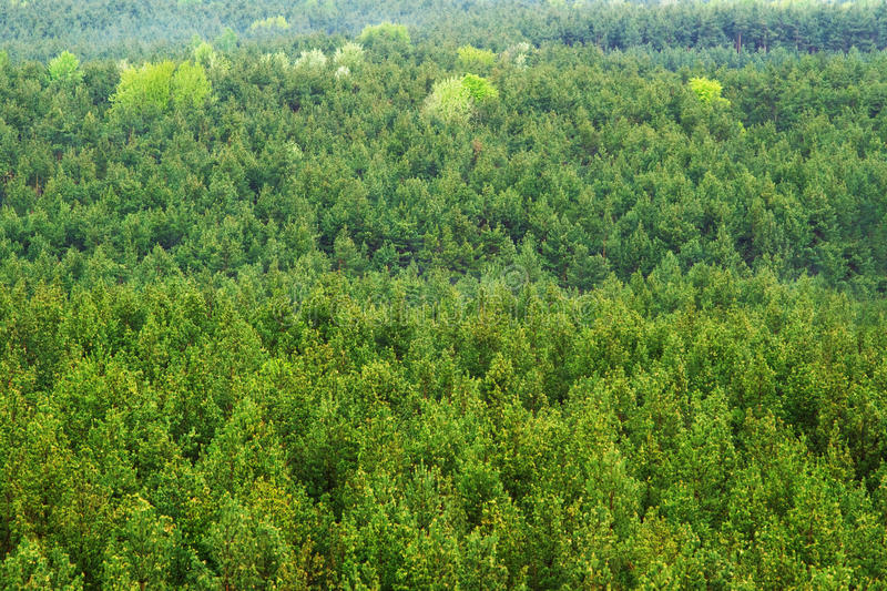 空中森林山景 库存照片