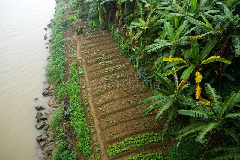 空中照片农业在亚洲 库存照片