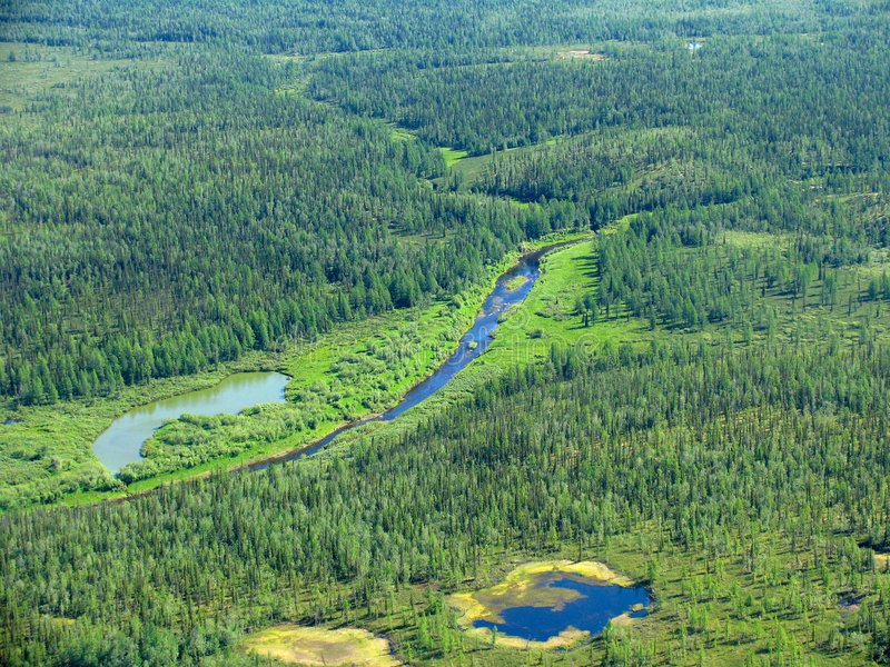 空中西伯利亚taiga视图 免版税库存图片