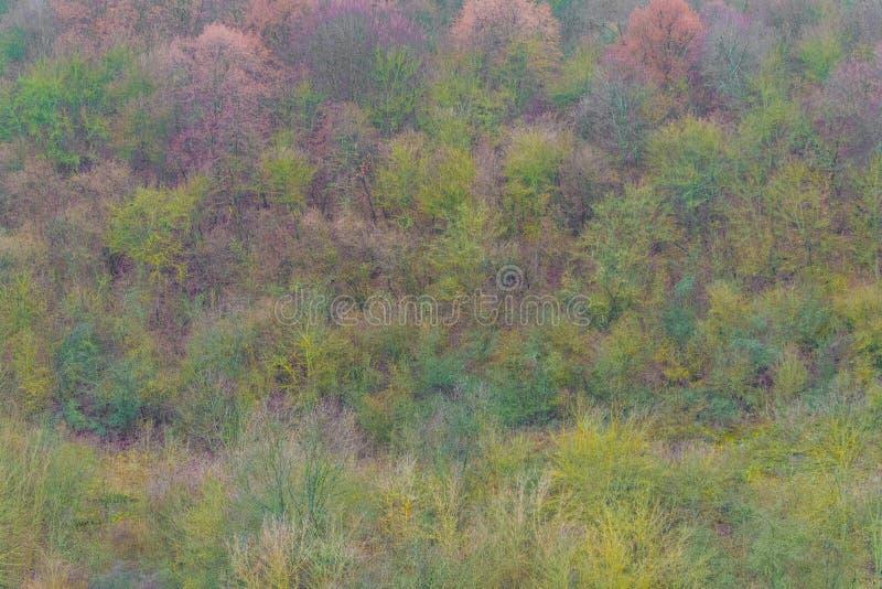 空中顶视图,秋天风景狂放的森林 免版税库存图片