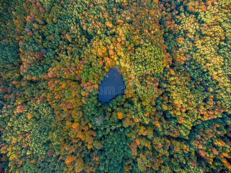 空中顶视图 秋天横向 狂放的森林湖 库存照片