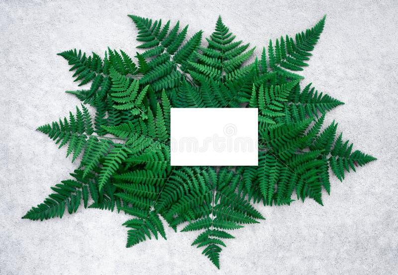 空插件和深绿蕨叶子凝结面上 免版税库存照片