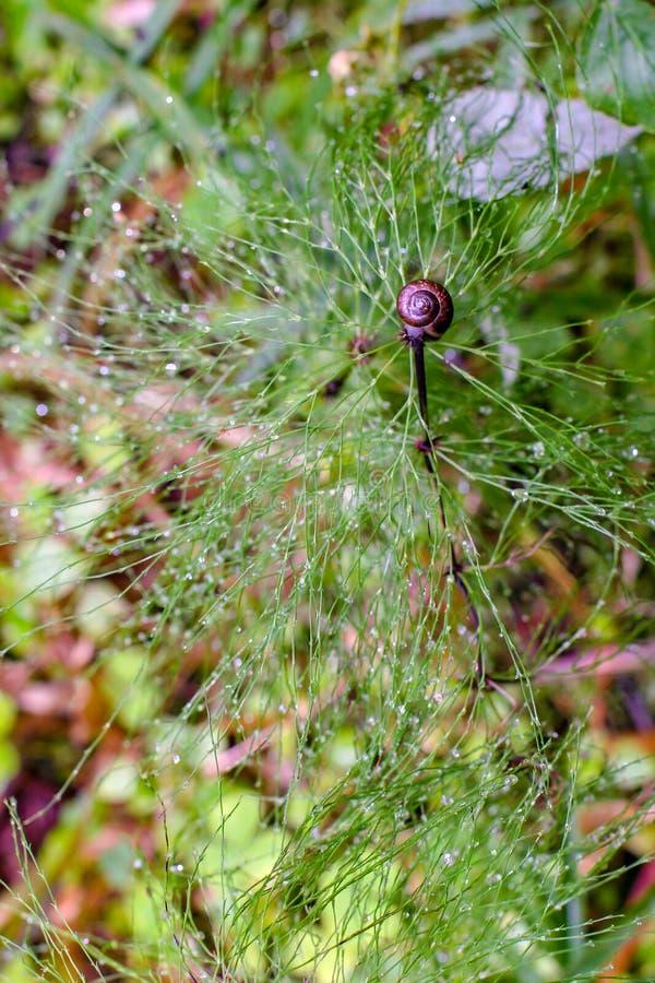 空气在技巧的灌木和蜗牛的顶视图与露水的 免版税库存图片