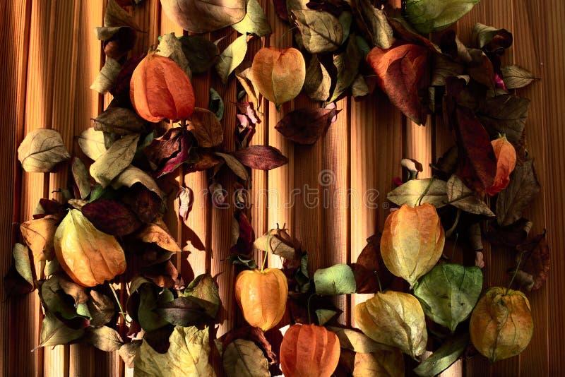 空泡和烘干在木背景的叶子 库存图片