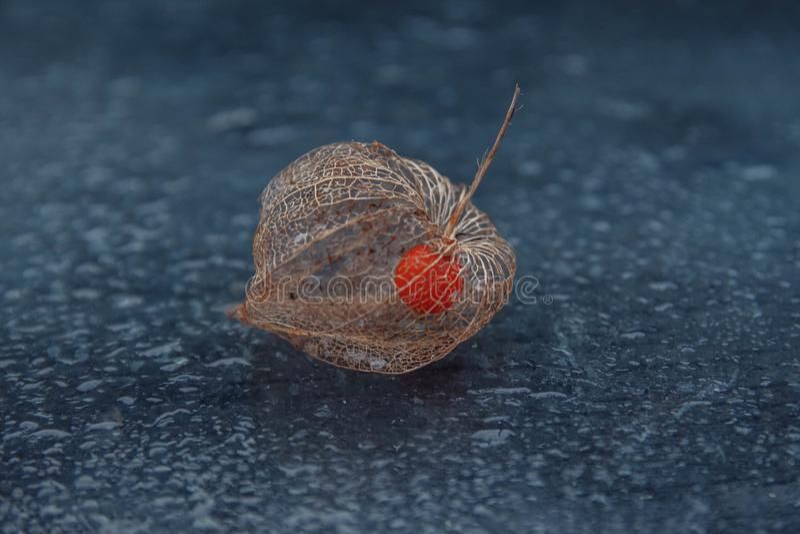 空泡果子在一个最基本的箱子和bokeh的 免版税库存图片