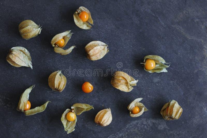 空泡果子,灯笼果的安排,在自然板岩背景 免版税库存照片