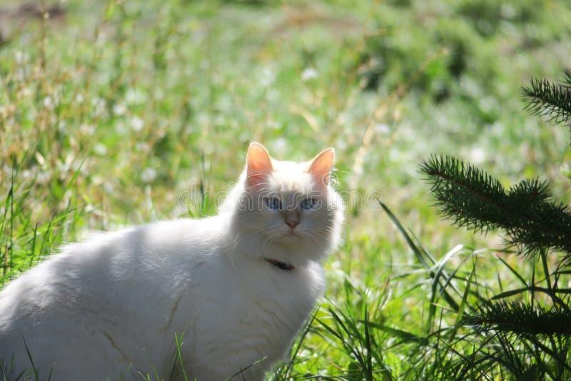 Download 空白全部赌注 库存照片. 图片 包括有 空白, 放置, 颊须, 全部赌注, 宠物, 疲乏, 猫叫声, 毛茸 - 59100750