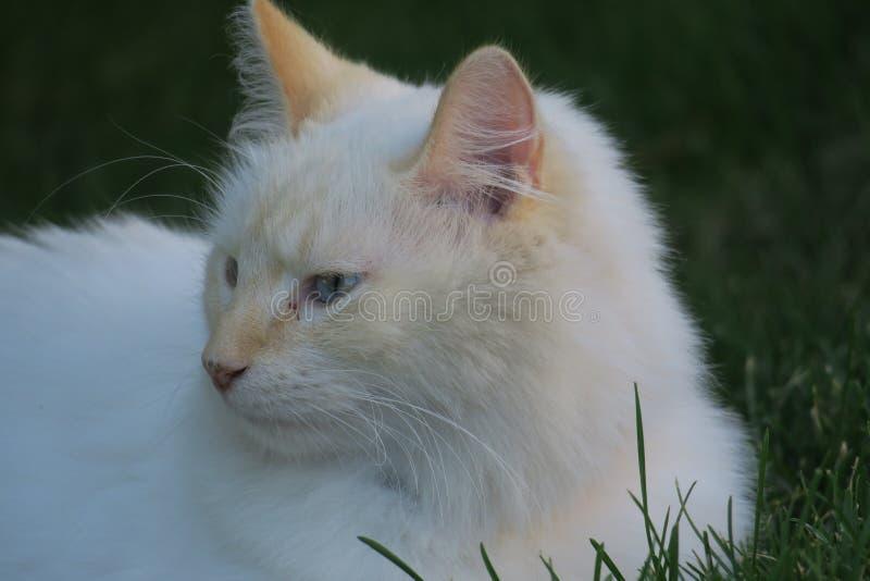 Download 空白全部赌注 库存照片. 图片 包括有 宠物, 疲乏, 毛茸, 颊须, 空白, 猫叫声, 全部赌注, 放置 - 59100838