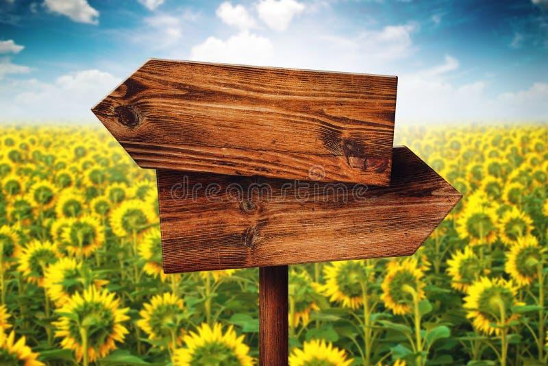 空白土气在木的方向对面签到向日葵领域 库存照片