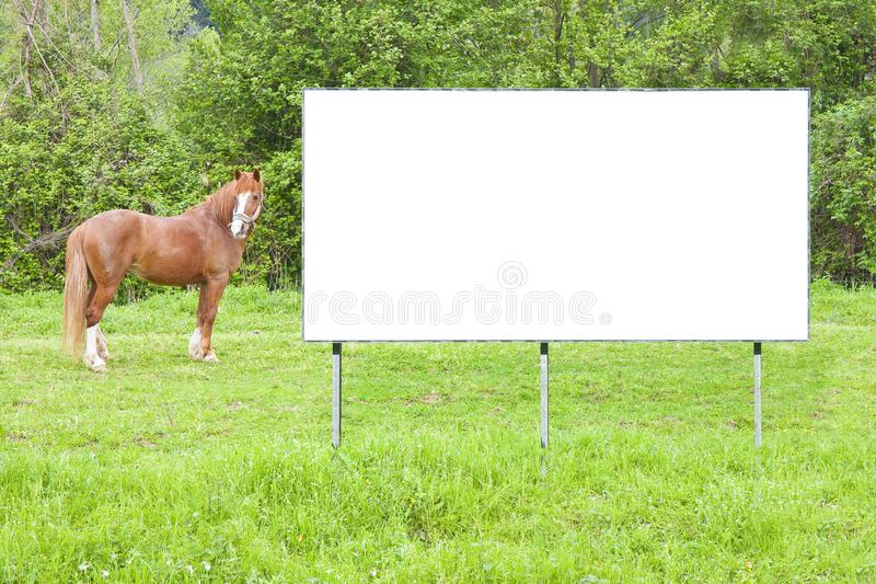 空白在与棕色马的一个农村场面浸没的商业广告广告牌-与拷贝空间的图象 免版税库存照片