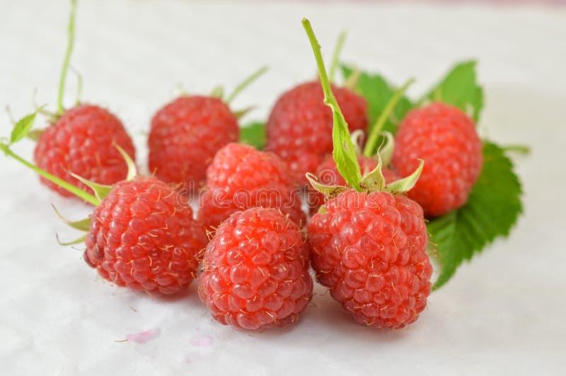 空白新鲜的莓 库存照片