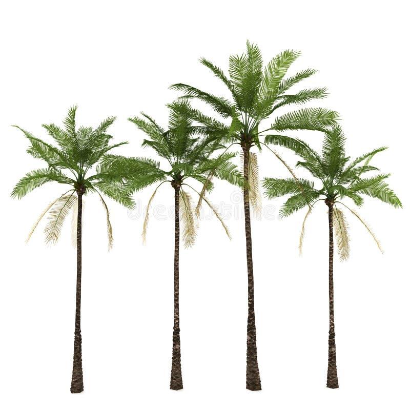 空白查出的棕榈树 皇族释放例证