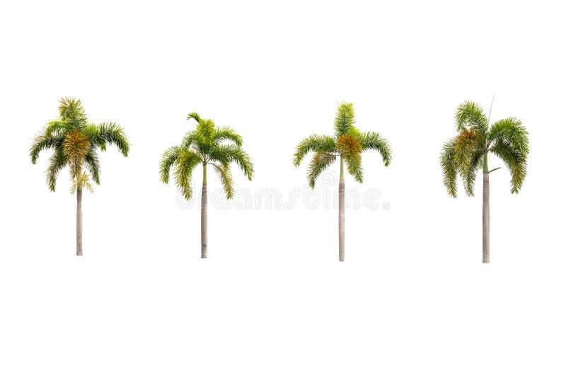 空白查出的棕榈树 免版税库存照片