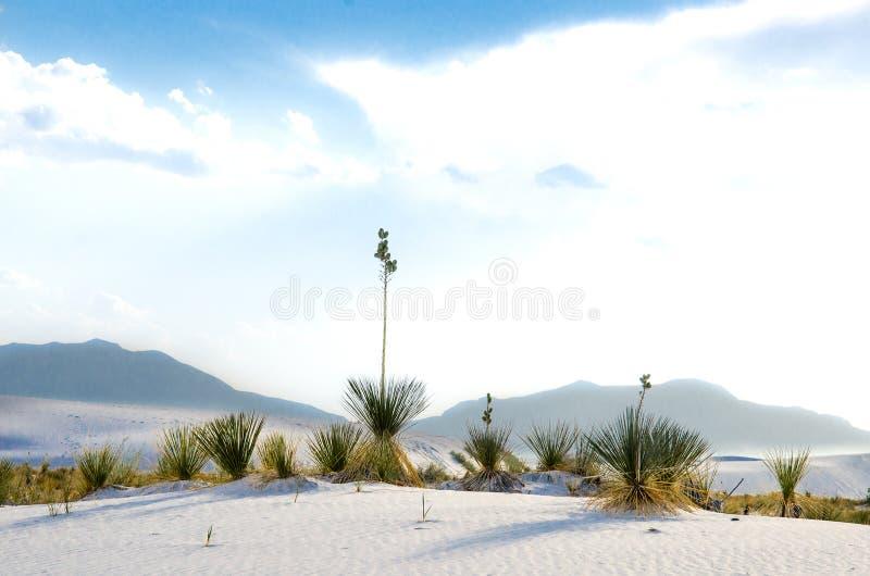空白沙丘国家公园 免版税库存图片
