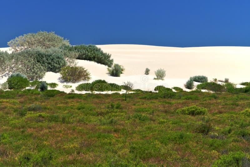 空白沙漠, Nambung国家公园,南西部 库存图片