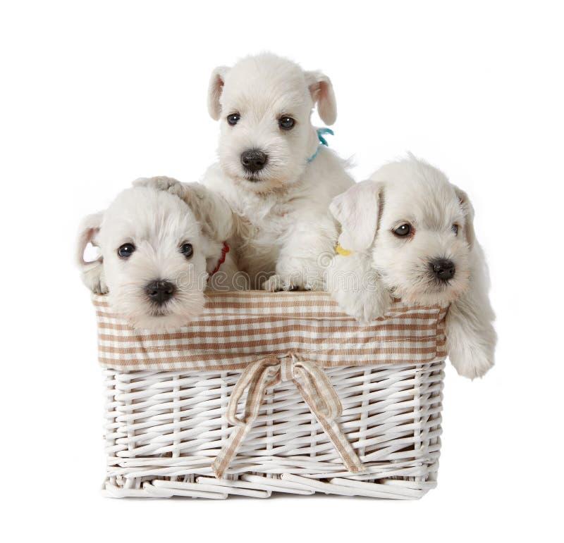 空白的小狗 免版税库存照片