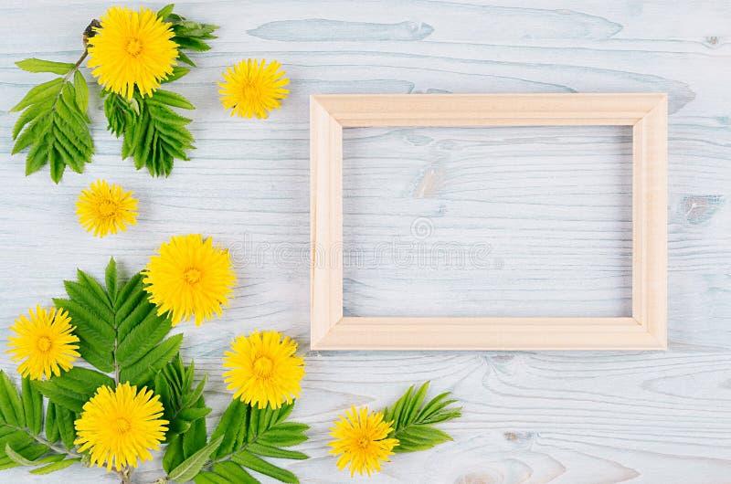 空白的木框架春天背景,黄色蒲公英在浅兰的木板开花,年轻绿色离开 复制空间,名列前茅vi 库存照片