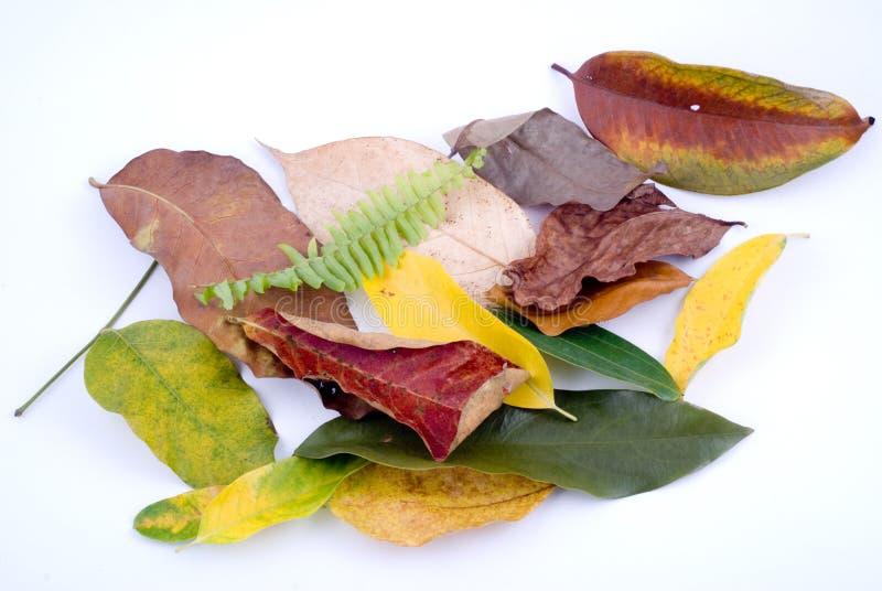 空白的秋叶 库存照片