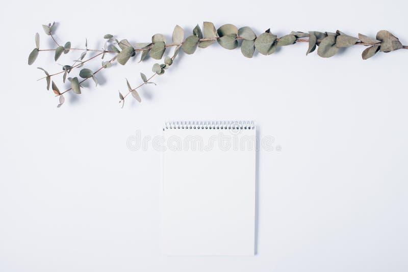 空白的笔记薄和玉树分支的最小的构成 库存照片