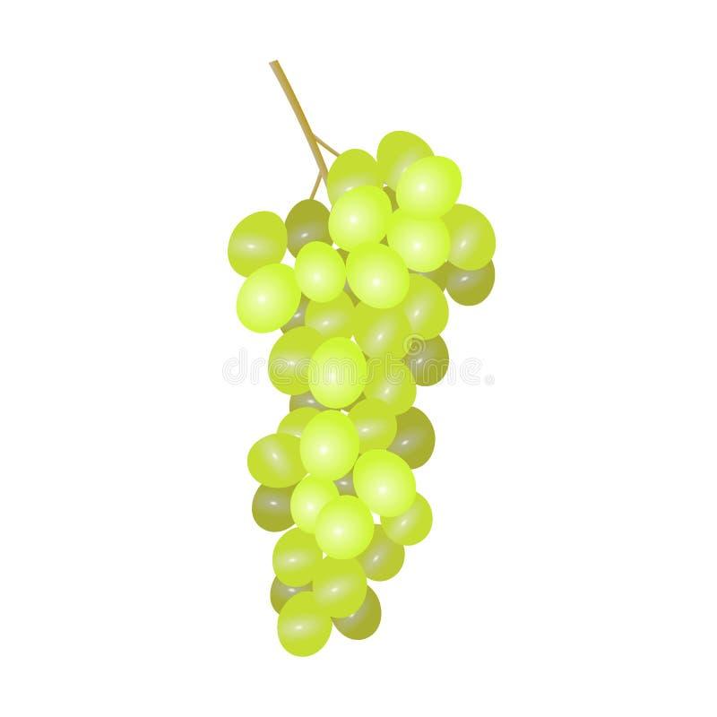 空白的葡萄 库存例证