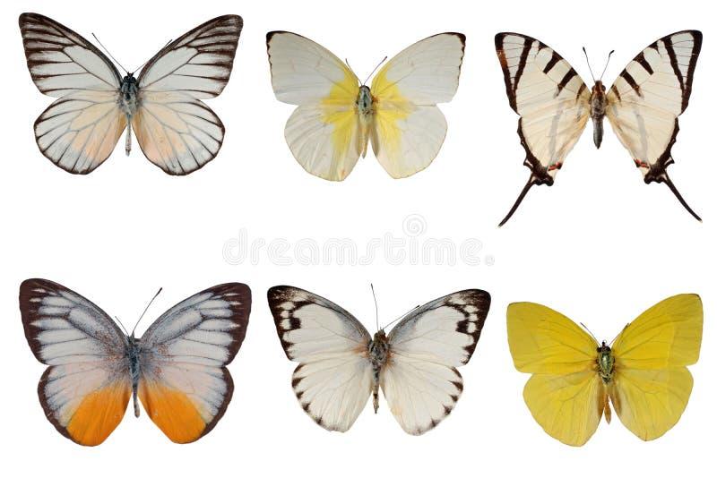 空白的蝴蝶 库存图片