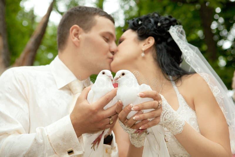 空白的鸠对负亲吻新婚佳偶 库存照片