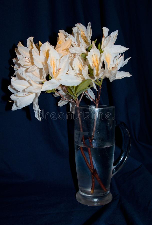 空白的lillies 免版税图库摄影