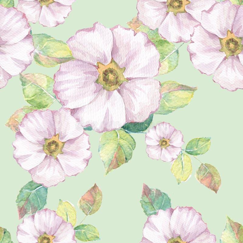 空白精美的花 花卉无缝的模式3 库存例证