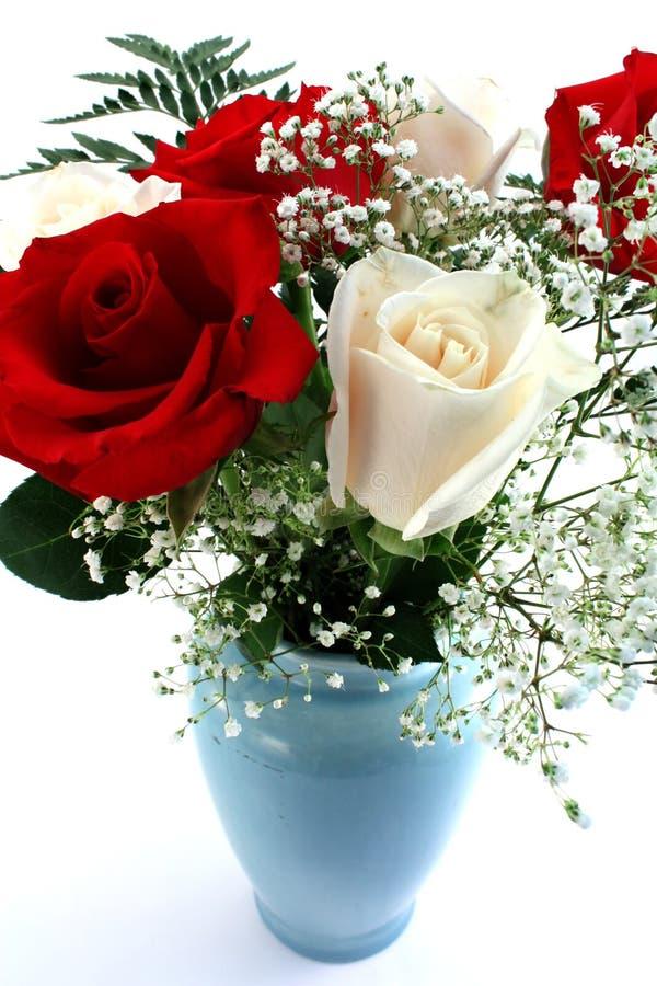 空白红色的玫瑰 库存照片