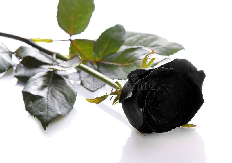 空白背景黑色的玫瑰 免版税库存图片
