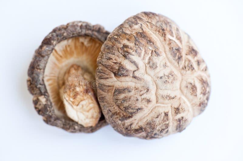 空白花日本的蘑菇 免版税库存照片