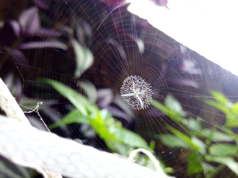 空白蜘蛛 免版税库存图片
