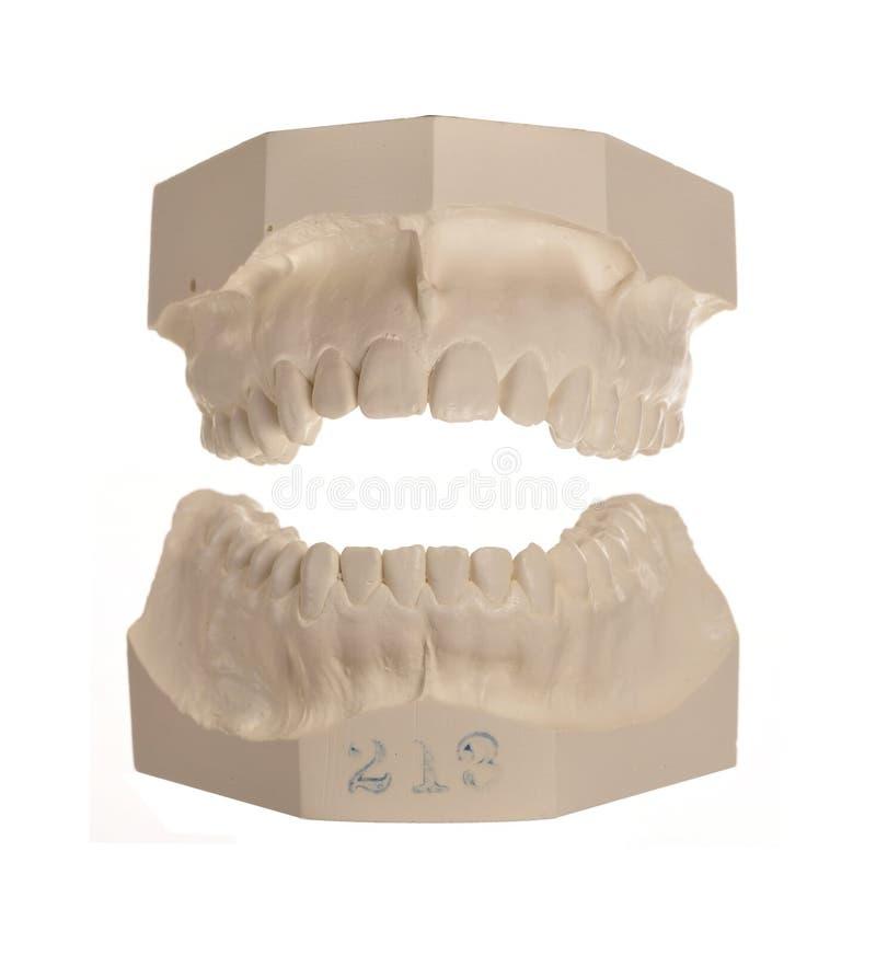 空白设计石的牙 免版税图库摄影