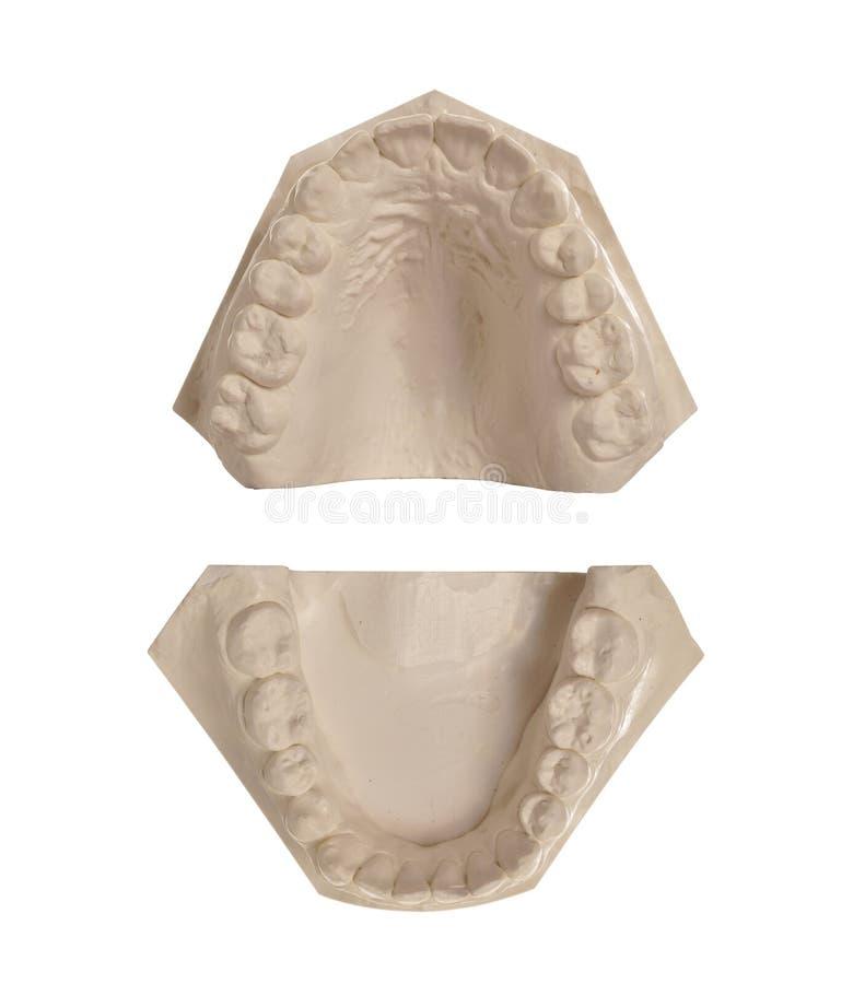 空白设计石的牙 库存照片