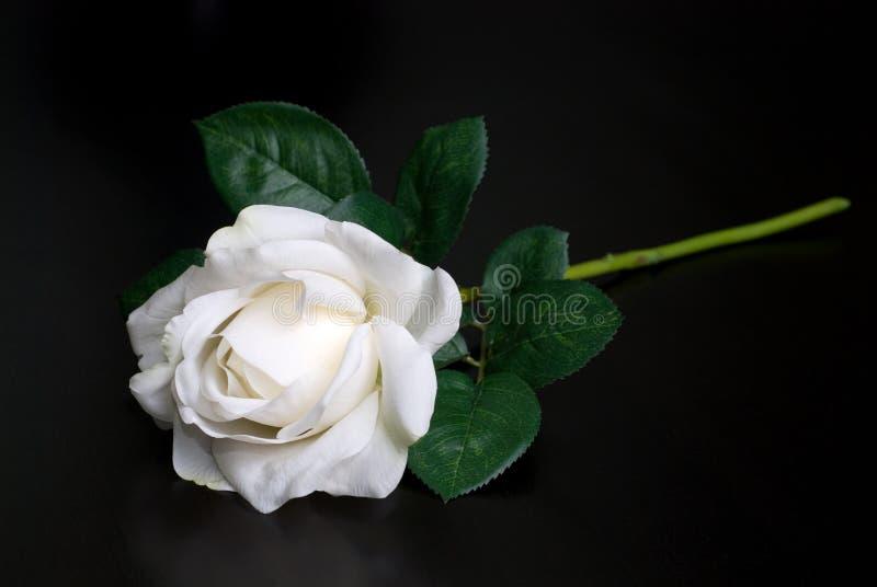 空白选拔玫瑰色 库存图片