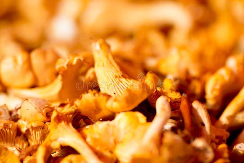 空白4黄蘑菇查出的蘑菇的片 免版税库存照片