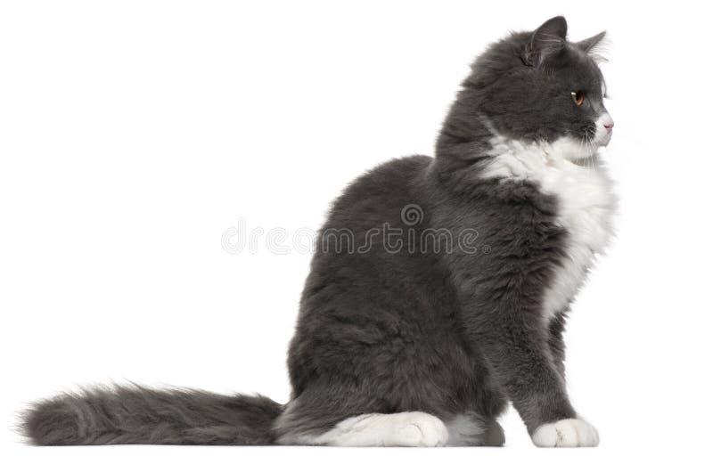 空白5个猫灰色的月 库存照片