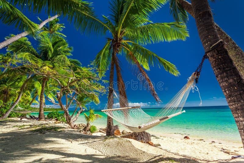 空的吊床在棕榈树树荫下在热带斐济的