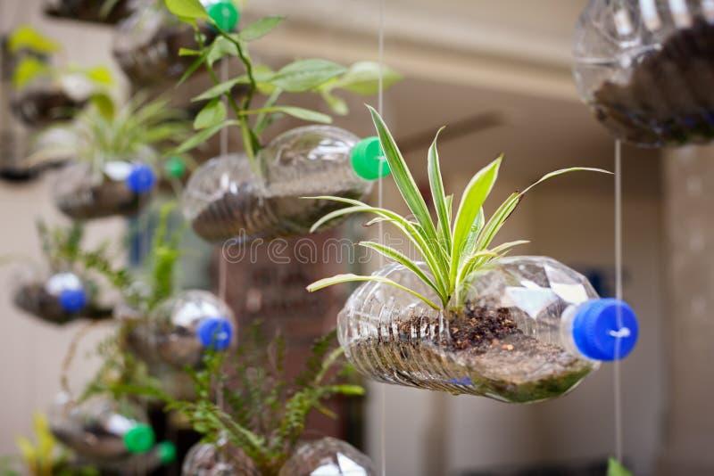 空的塑料瓶使用作为容器为生长植物, recy 免版税库存照片