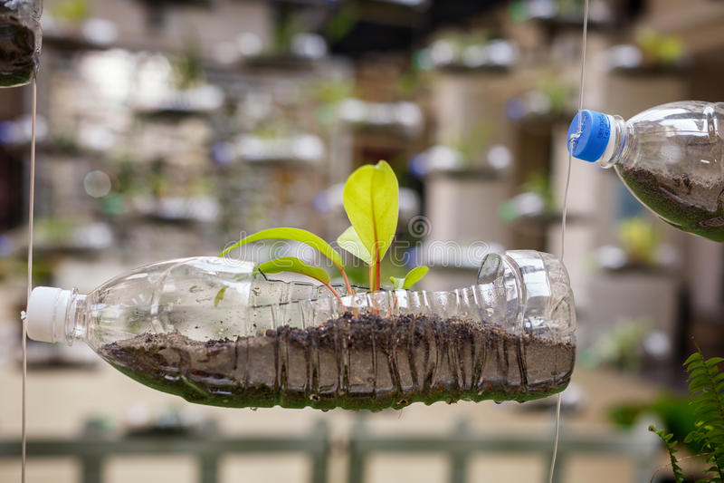 空的塑料瓶使用作为容器为生长植物, recy 库存照片