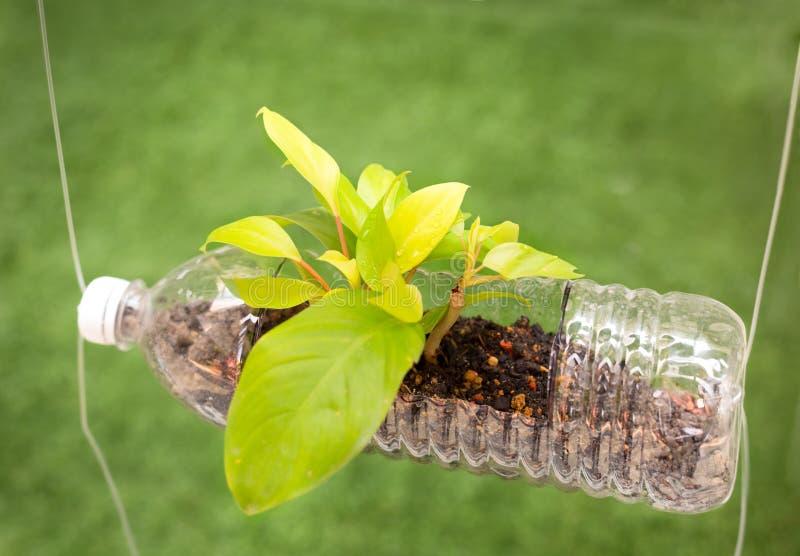空的塑料瓶用途作为生长植物的, recyc一个容器 库存图片