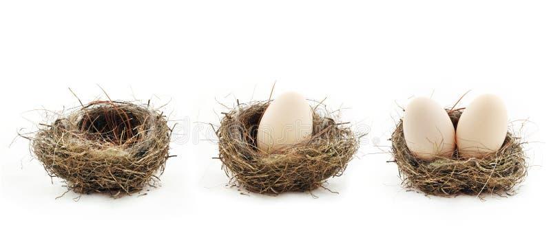 空的巢和鸡蛋在巢里面 库存图片