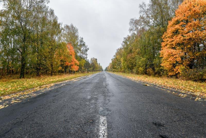 空的柏油路通过秋天森林 与路的秋天场面在森林里 免版税库存照片