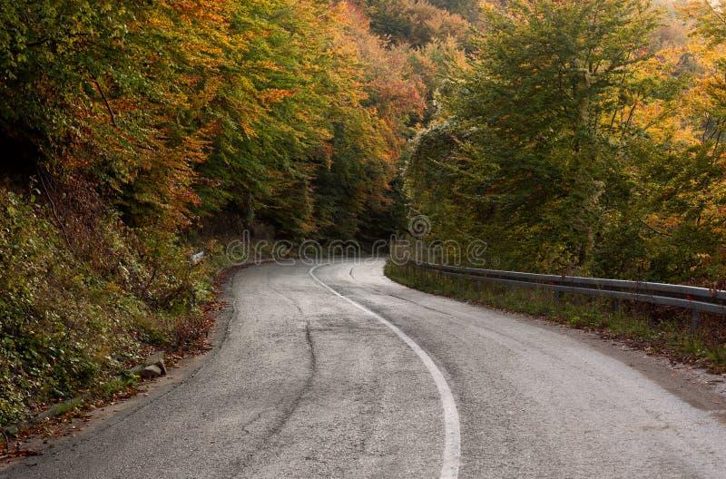 空的柏油路通过秋天森林 图库摄影