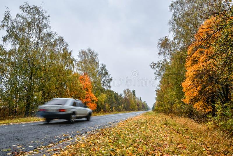 空的柏油路通过theflower hautumn森林和模糊的汽车 与路的秋天场面在森林里 免版税图库摄影